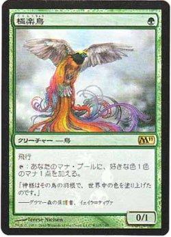 画像1: 極楽鳥/Birds of Paradise (Buy a Box)